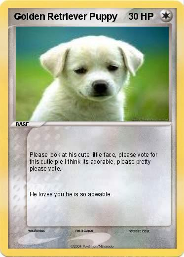 cute golden retriever puppies pictures. Pokemon Golden Retriever Puppy