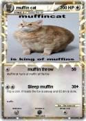 muffin cat