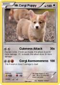 Mr.Corgi Puppy