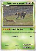 Tiger chasing a