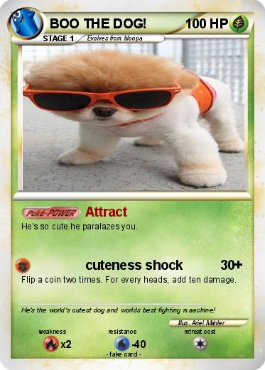 Best Dog To Attract A Date