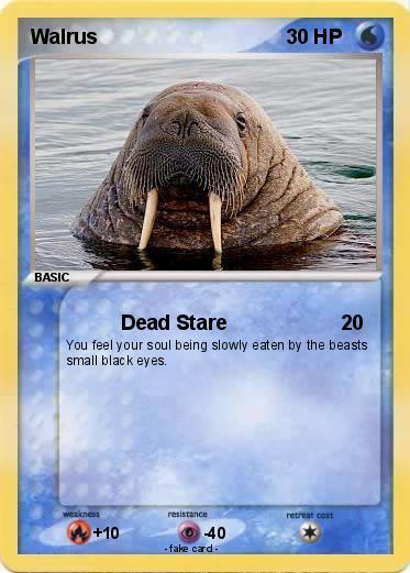 Robbaz walrus dating apps