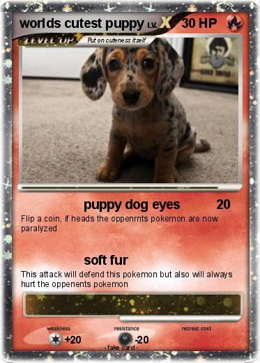 Pokemon worlds cutest puppy