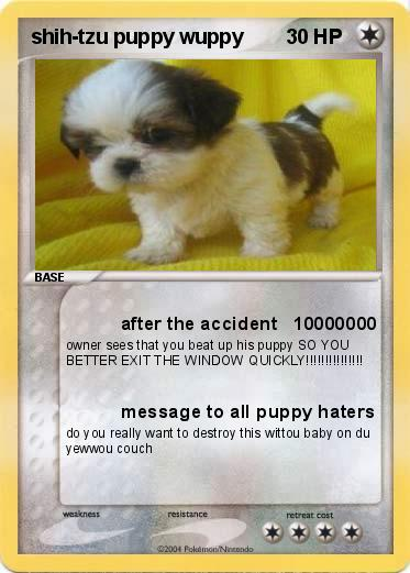 Pokemon shih-tzu puppy wuppy