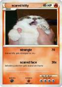 scared kitty