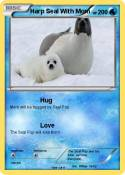 Harp Seal With