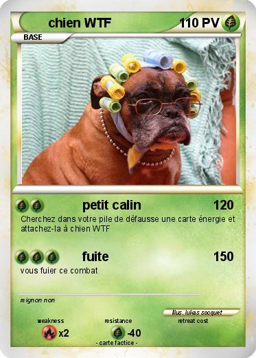 pok 233 mon chien petit calin ma carte pok 233 mon