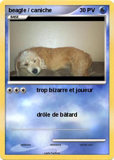 Pok mon beagle caniche trop bizarre et joueur ma carte - Caniche dessin ...