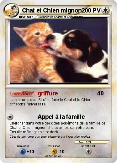 Pok mon chat et chien mignon griffure ma carte pok mon - Photo de chien et chat mignon ...