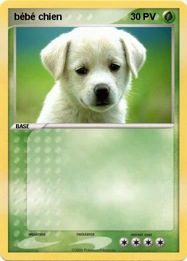 Pok mon bebe chien 3 3 ma carte pok mon - Image bebe chien ...