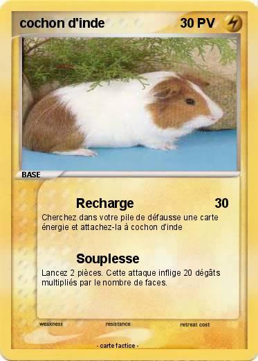Pok mon cochon d inde 54 54 recharge ma carte pok mon - Cochon pokemon ...
