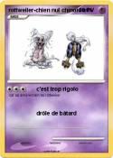 rottweiler-chien