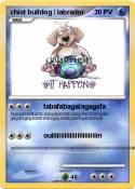 chiot bulldog /