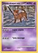 coyote-sharpeï