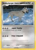 husky-berger
