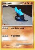 chat-requin