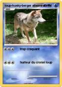 loup-husky-berger