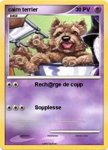 Pokemon cairn terrier