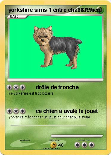 Pokemon yorkshire sims 1 entre chat & chien