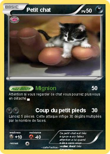 Pokemon Petit chat