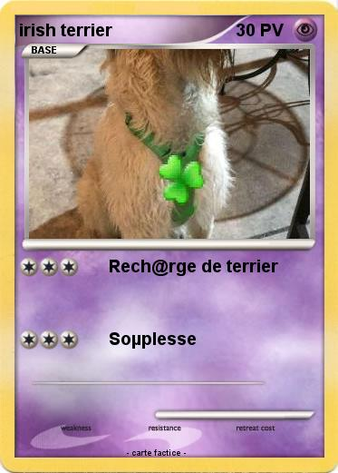 Pokemon irish terrier