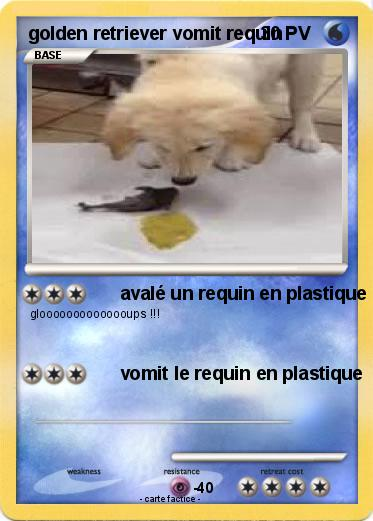 Pokemon golden retriever vomit requin