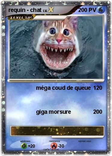 Pokemon requin - chat
