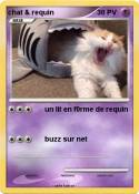 chat & requin