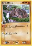 Le chat bissar