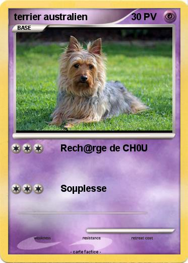 Pokemon terrier australien
