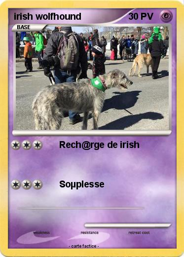 Pokemon irish wolfhound