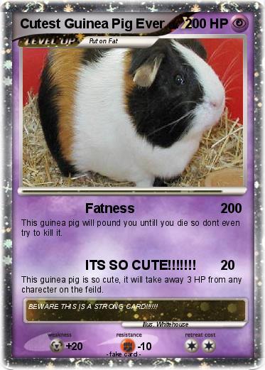 Pok 233 Mon Cutest Guinea Pig Ever Fatness My Pokemon Card