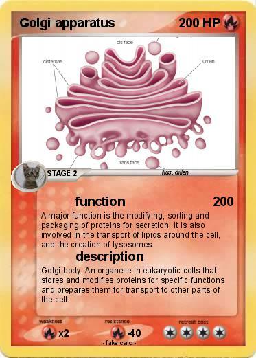 pokémon golgi apparatus 15 15 function my pokemon card