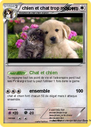 Pok mon chien et chat trop mignon chat et chien ma - Photo de chien et chat mignon ...