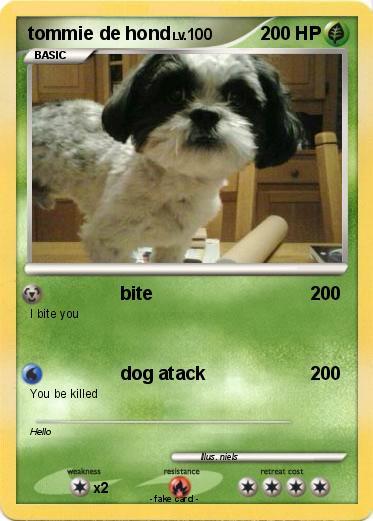 Pokemon Tommie De Hond