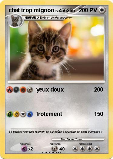 Images chats trop mignons - Image de chaton trop mimi ...