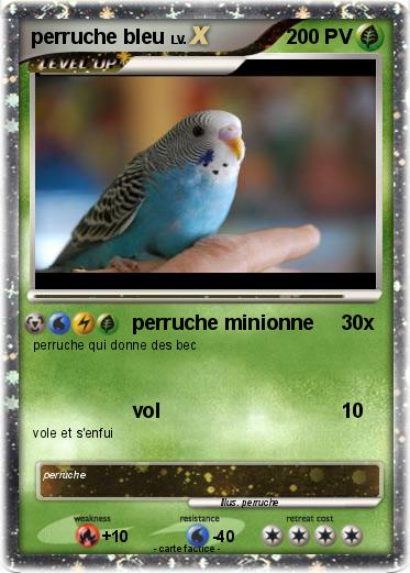 Pok mon perruche bleu 1 1 perruche minionne ma carte - Coloriage perruche ...