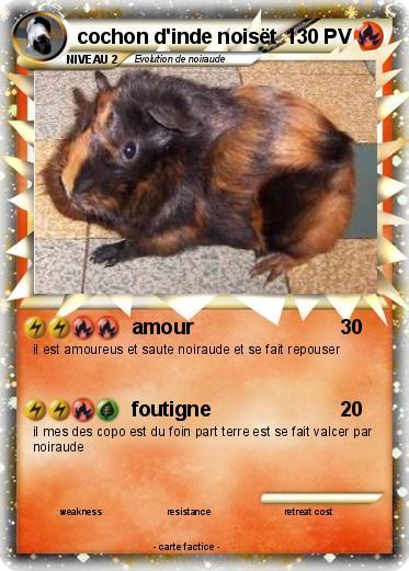 Pok mon cochon d inde noiset amour ma carte pok mon - Cochon pokemon ...