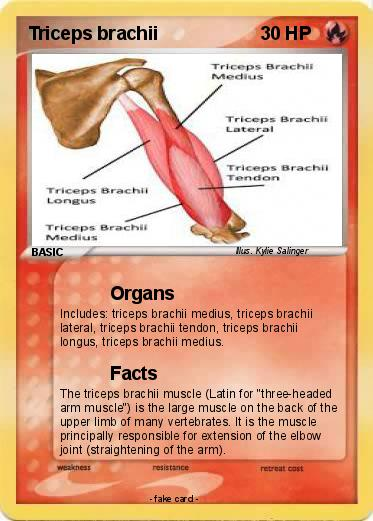 Pokémon Triceps brachii - Organs - My Pokemon Card