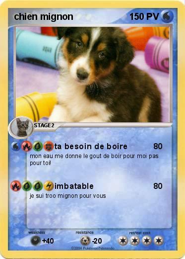 Pok mon chien mignon 3jxc ta besoin de boire ma carte - Photo de chien et chat mignon ...