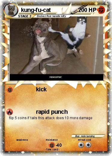 Kung fu cat gif