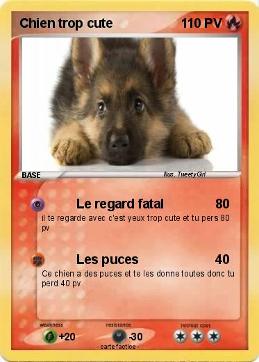 Pok mon chien trop cute 1 1 le regard fatal ma carte - Photo de chiot a imprimer ...
