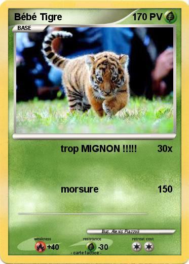 Pok mon bebe tigre 72 72 trop mignon ma carte - Bebe tigre mignon ...