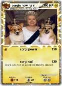 corgis now rule