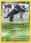 terrier noir