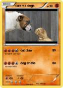 cats v.s dogs