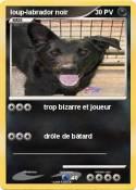 loup-labrador