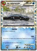 my salamander