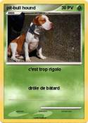 pit-bull hound
