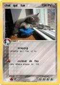 chat qui tue